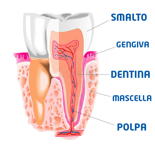 illustrazione dente
