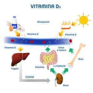 illustrazione vitamina D
